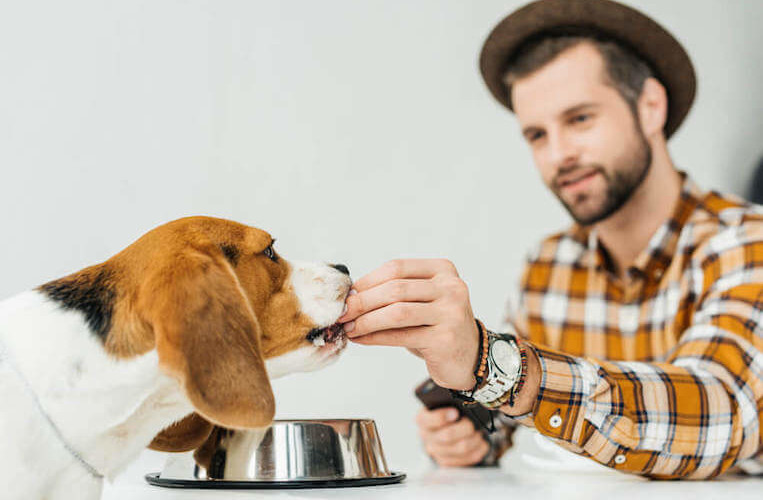 Dog food and care