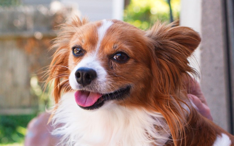 10 Tips to Make your Dog's Life Happy & Healthy