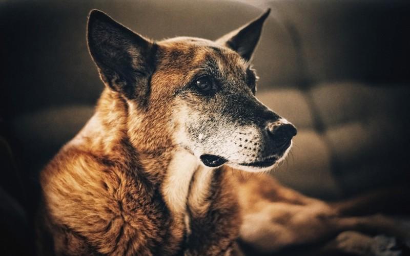 Top 10 Signs of a Happy, Healthy Dog